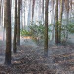 Pożar ściółki las