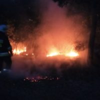 Pożar poszycia leśnego - Cerekwica