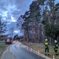 Zwisający konar i wypadek samochodowy - 5 marca 2019